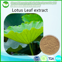Lotus Leaf Extract Powder/ Nuciferine/ Flavone loss weight