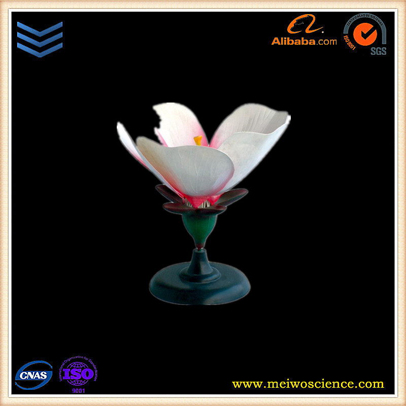 Plastic PVC flower of peach blossom biology model for teaching