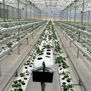 hydroponics greenhouse, vertical hydroponicsystem, 6 inch rockwool cubes growing medium