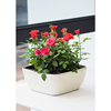 Popularly multicolored rectangular planter box New