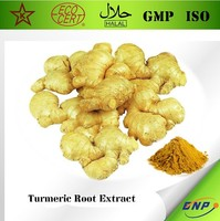 BNP Supply High Quality Turmeric Root Extract Rich in Curcumin Curcuminoids