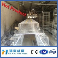 chicken egg poultry farm with factory price
