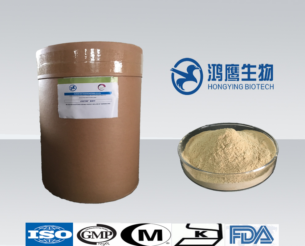 Factory Supplement High Enzyme Activity Glucoamylase Food Grade