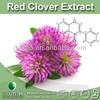 Halal&Kosher Red Clover Plant Extract/High Quality Red Clover Extract Powder