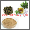 Hot Sell Green tea Extract 90 Percent EGCG