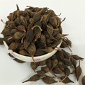 Lian Qiao bulk factory price Top Quality Herbal Medicine Forsythia