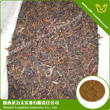 top quality uncaria extract with 20% rhynchophylline