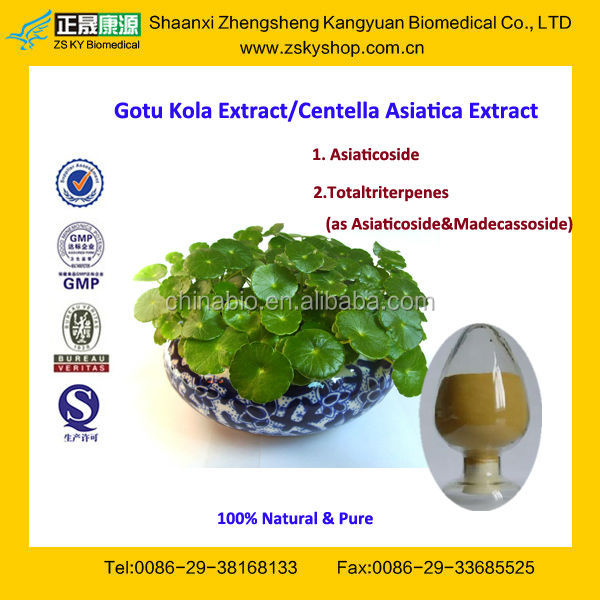 GMP Factory Supply Pure Hydrocotyle Asiatica Extract