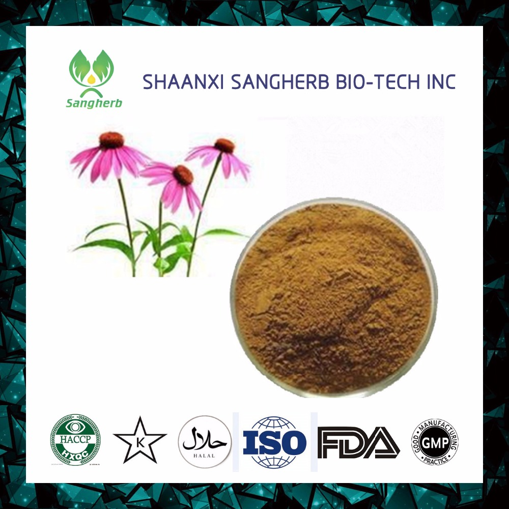 Professional manufacturer supply all specification purple coneflower extract powder Echinacea angustifolia extract