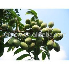 Olive seed extract and olive fruit extract powder