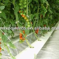 Complete Hydroponic System For Grow Tomato