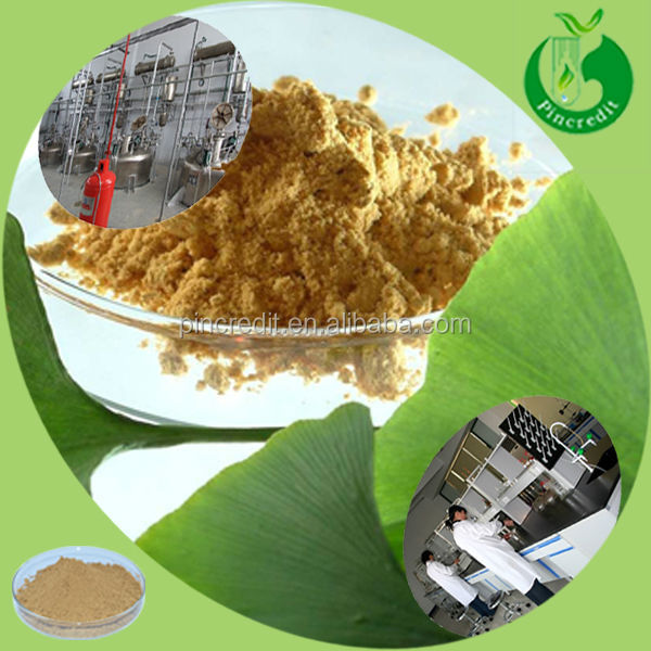 GMP supply ginkgo biloba extract dried ginkgo biloba leaves powder