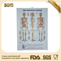 the skeletal system 3d anatomy chart/ hospital wall anatomy chart/ medical 3d chart