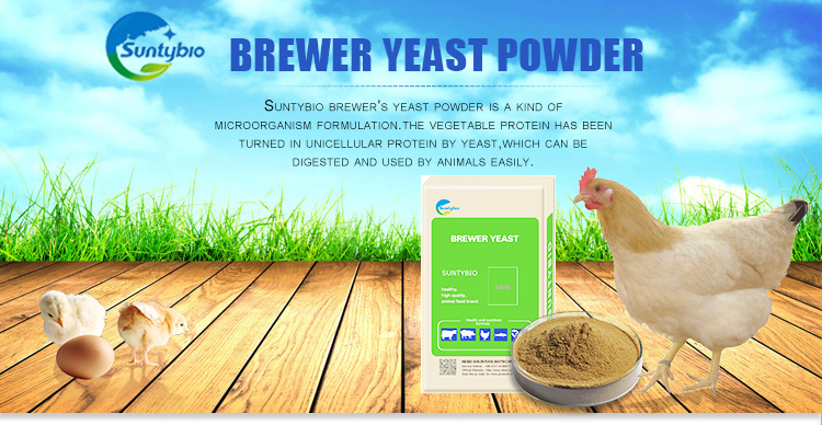 brewer yeast inprove animal's appetite