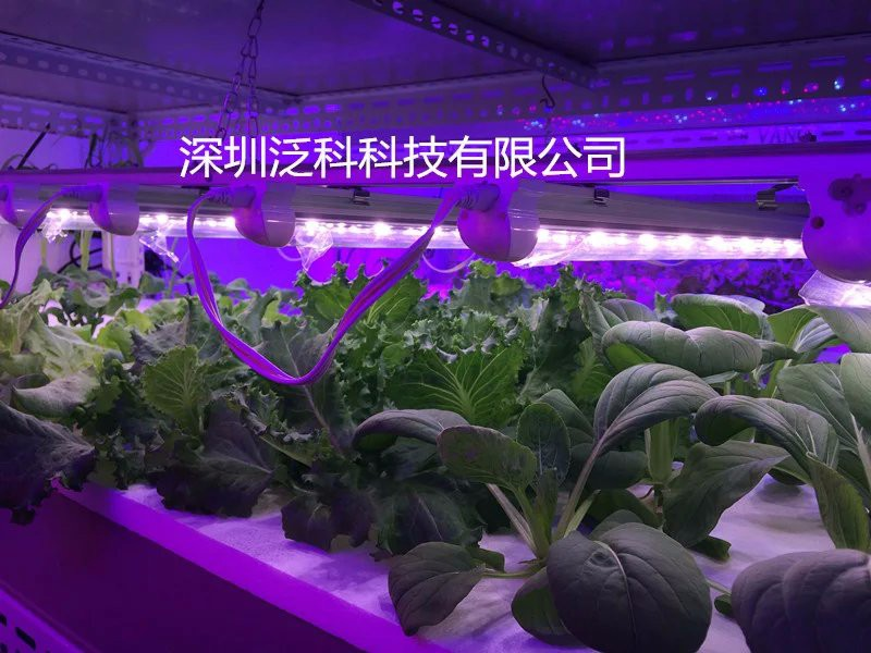 VanQ 30w plant tissue culture led grow light,1.2M led plant grow light red blue for greenhouse plant grow