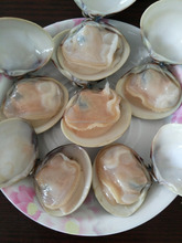 Best season and quality Frozen Cooked Hard Clam Sale