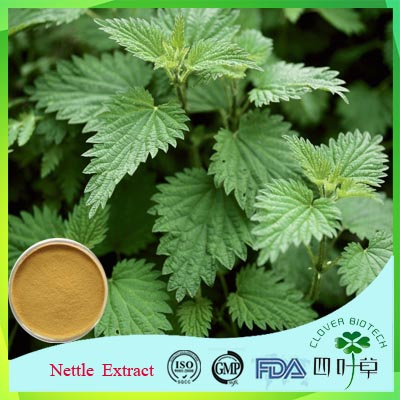Natural Smartweed Extract with Competitive Price