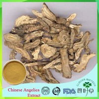 GMP Factory Supply Angelica Sinensis Extract