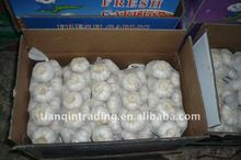 fresh pure white garlic seller
