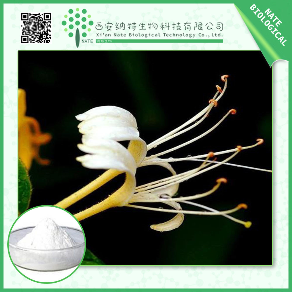 Honeysuchle Flowers Extract Chlorogenic Acid 98%