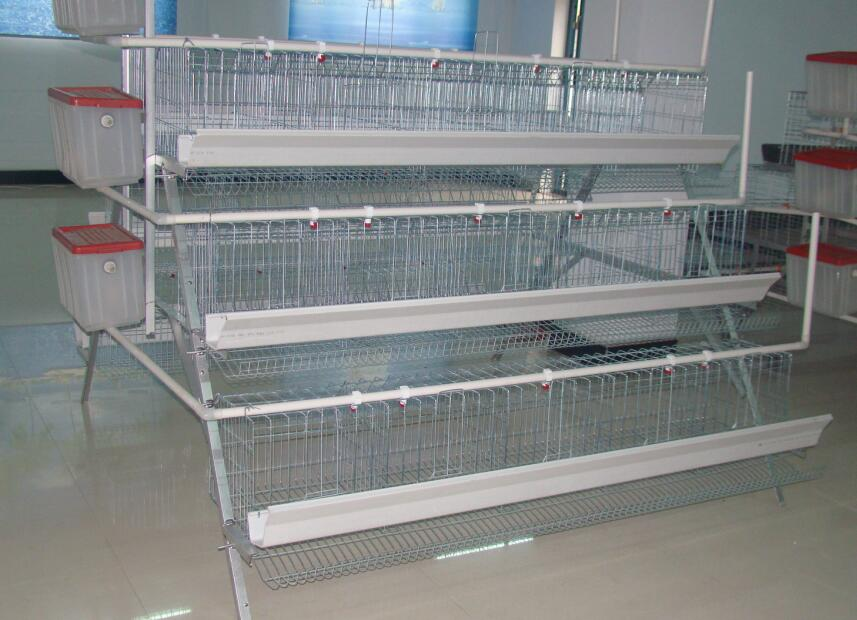 Poultry farms Animal poultry cages chicken cages cells hens