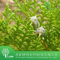 100% natural Cacumen Biotae extract /Cacumen Platycladi Extract for tranquilizing the nerves