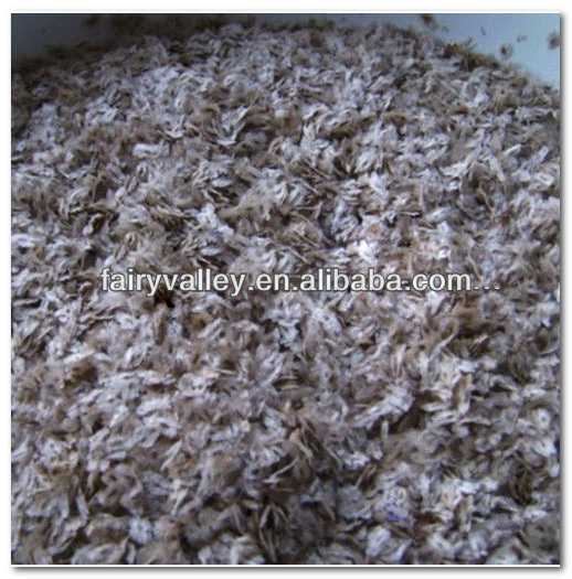Royal Paulownia Tree Seeds For Fast Growing-High Quality