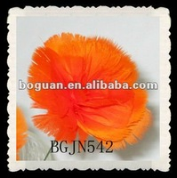 real nation feather carnation flowers