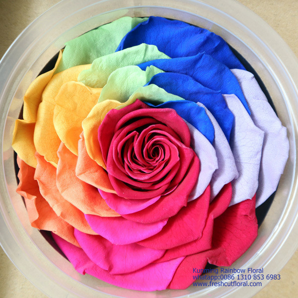 Multi-Colored Forever Rose The Bella Rose From China Flower Company For Wreath