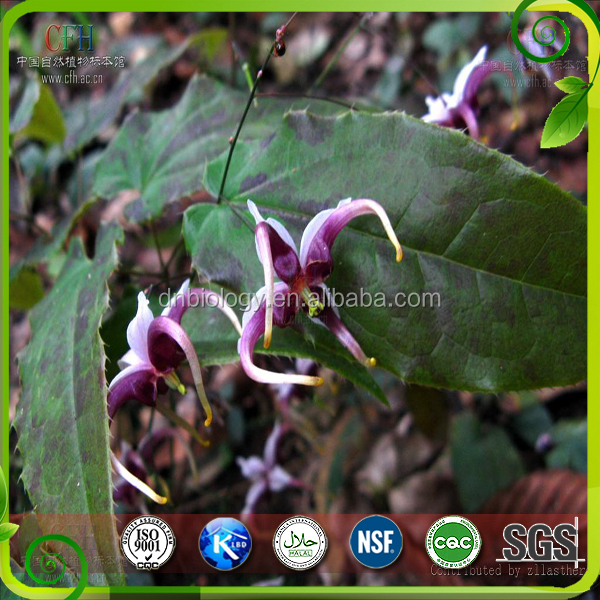 Natural Epimedium Extract Powder Icariin Horny Goat Weed Extract Epimedium Extract
