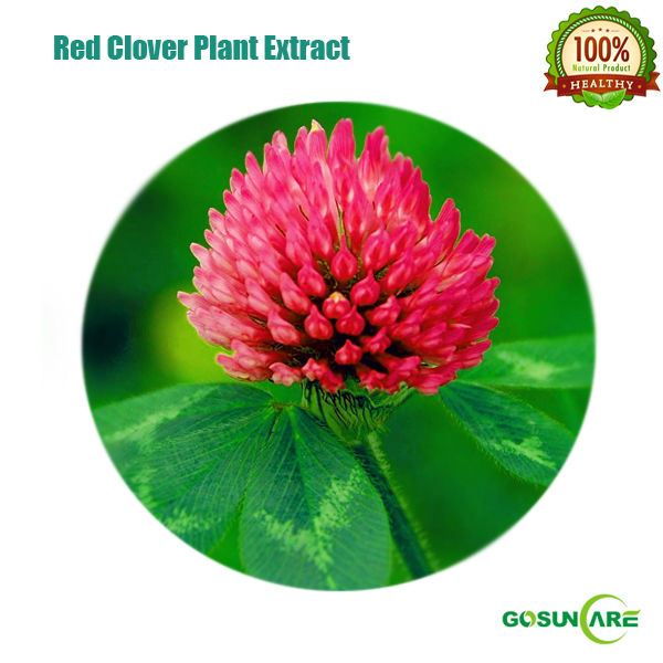 High Quality Red Clover P.E