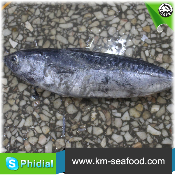 Fresh Sea Frozen Bonito Fish With Prices