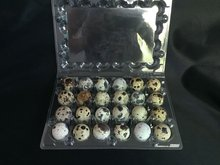 Hot sale 24 hole plastic pvc clear quail egg packing tray /quail egg cartons for sale