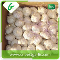 Fresh normal white organic garlic