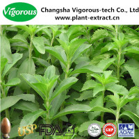 Stevioside 60%-98% stevia extract/stevia price/stevia leaf extract