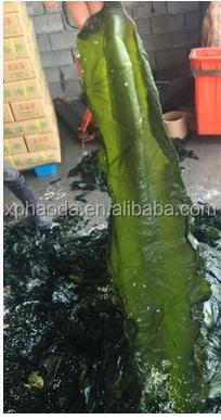 hot sale Seaweed Kelp/Laminaria/Kombu for Food