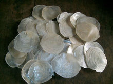 raw capiz shells for sale....