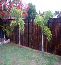 Wy-J121Handicraft Products Natural Color Bamboo Fence/Bamboo Hedge