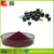 100% Water soluble freeze dried blueberry fruit powder
