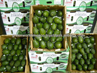 FRESH AVOCADO - PREMIUM QUALITY FOR SALE