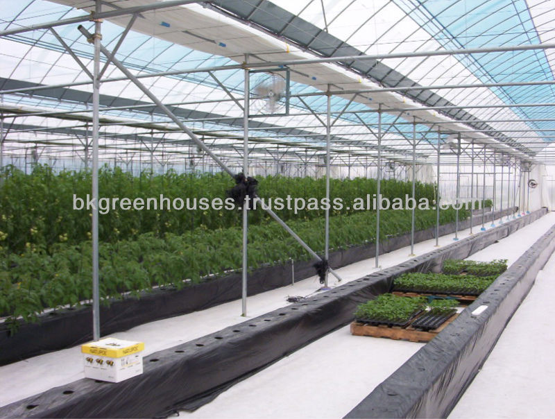Film Greenhouse for tomato and other vegetables