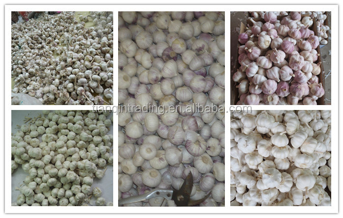 new crop fresh garlic