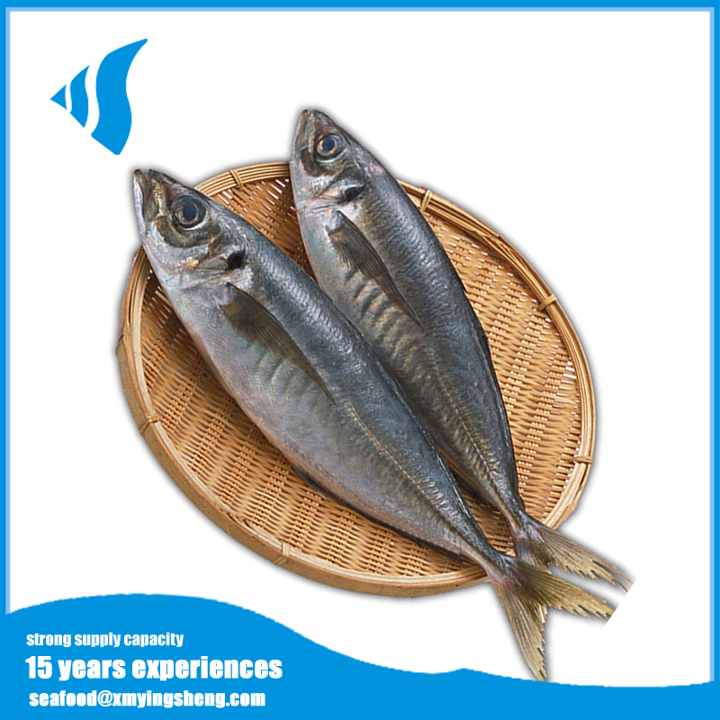 Frozen bulk canned food canned mackerel fish for sale
