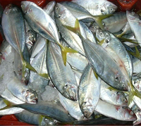 Frozen And Fresh Seafood Indian Mackerel
