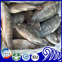 Sino Types Of Frozen Foods Black Tilapia Fish Frozen