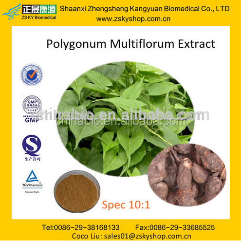 GMP Factory Supply Natural Polygonum Multiflorum Thunb Extract