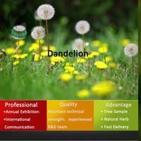 Dandelion root extract/dandelion extract/dandelion powder