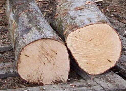 Red Beech and Red Oak Log Wood for sale