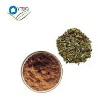 Hot sale Paraguay tea extract/High quality/Yerba mate extract/Regular blood pressure plant extract