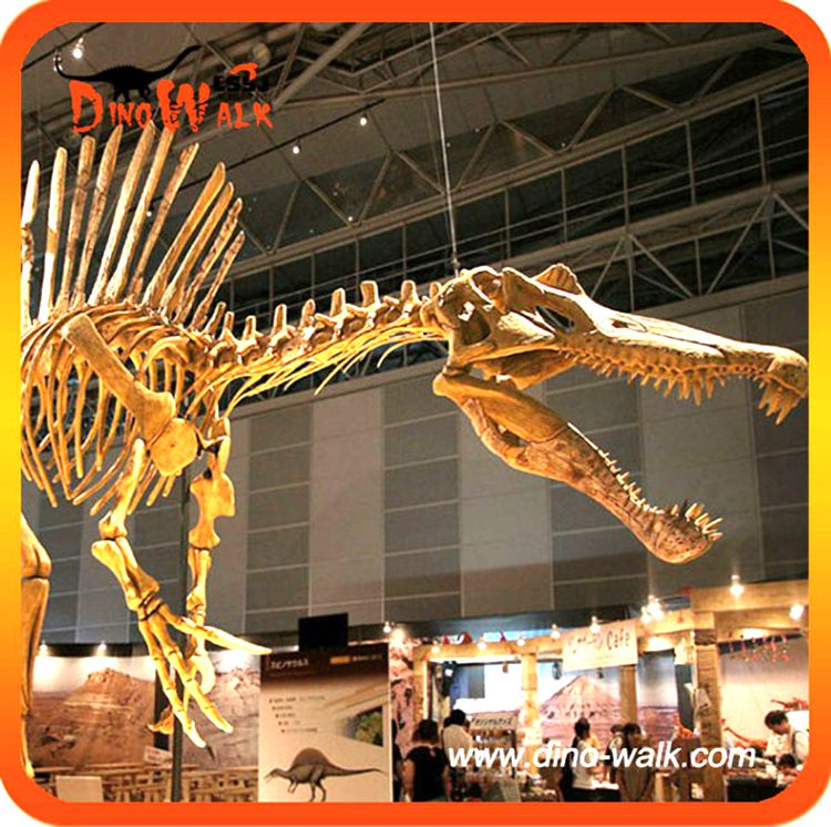 Dino0181 Dinosaur fossil skeleton replica for sale in Museum